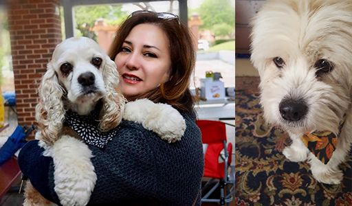 Michele Y. Garza's rescued dogs Cassie and Jax